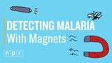 Unmasking Malaria With A Cheap Magnet And A Laser Pointer Joe's Big Idea NPR