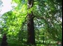 2014.05.24 Охота на Призрака - Экспедиция на Веретьев Погост (Кратко)
