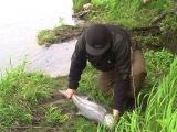 Рыбалка на Камчатке, река Колпакова, часть 4
