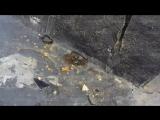 В Воронеже вандалы разгромили памятник Горшку из группы «Король и Шут»