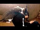Погладь кота Приколы про котов