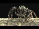 Бионика. Власть паутины
