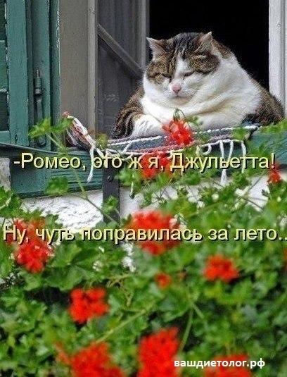 https://pp.vk.me/c543106/v543106313/16b5f/PoX4kAqxa_E.jpg