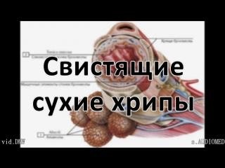 Аускультация легких