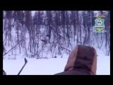 В Якутии мужчины незаконно охотилились на лосей и снимали это на видео