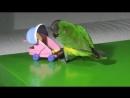 попугайчик))