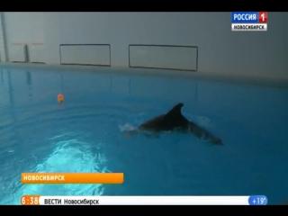 Дельфин Нюша предсказал ничью в матче сборных России и Уругвая