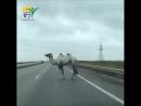 В мире животных на Тульской трассе