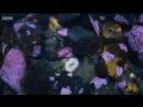 морской огурец,проснулся чтобы поесть