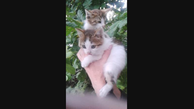 SOS Малыш-котёнок с одним глазиком и его братик ждут САМЫХ ЗАБОТЛИВЫХ ХОЗЯЕВ