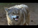 Весьегонская волчица(Боевики 2015,РУССКИЕ,ЛУЧШИЕ 2015,КРИМИНАЛЬНЫЕ ФИЛЬМЫ 2015,)