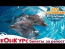 Дельфинарий Стерлитамак сентябрь 2018 трц СитиМолл