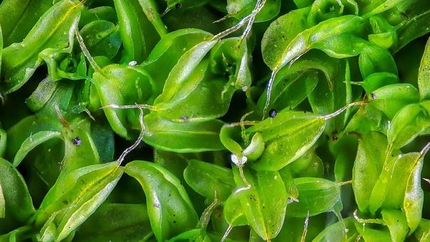 Привычное растение в макросъемке может выглядеть неожиданно.