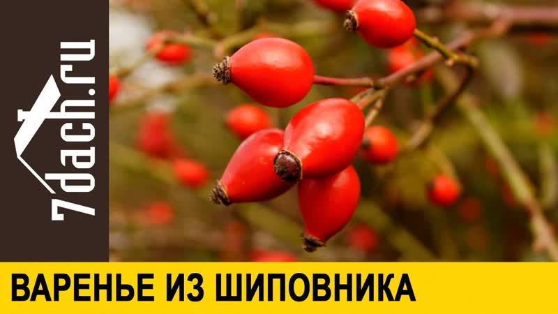 👩🌾 Варенье из шиповника - вкусная и полезная заготовка на зиму- 7 дач