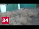 Тысяча чертей пробежалась по Астраханской области - Россия 24