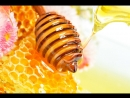 Каk отличить натурaльный мёд от подделки