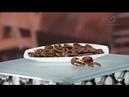 Сбор и переработка ореха пекан Из чего это сделано