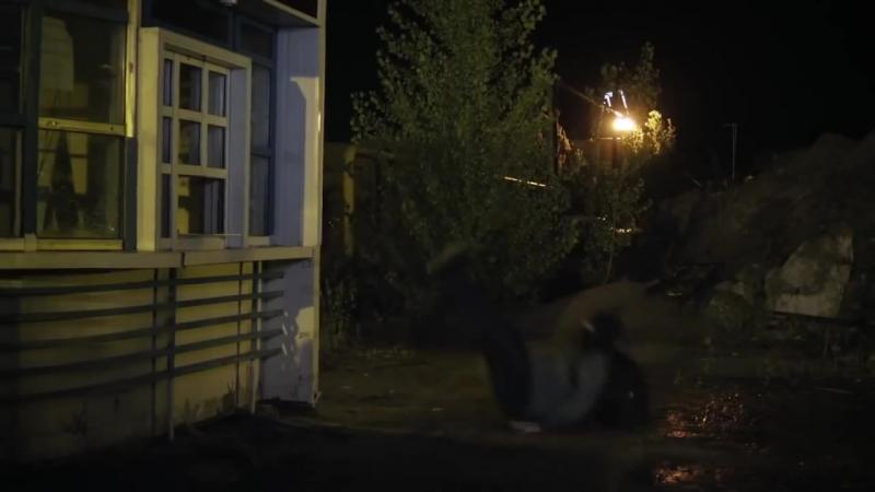 Московская борзая сериал. Постановка, подготовка, исполнение трюков.