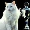 Международная выставка кошек в Королёве