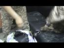 Таможенники показали норковые шубы, изъятые на Хоргосе