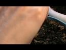 Экзотика Цитрусовые из семечка Как заставить цвести