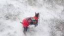 Покатушки и прогулка по снегу. Лада Гранта Лифтбек 2016.