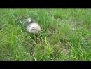 Танцы на траве от Котика Люмен Эст Покоритель Сердец