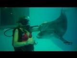 Подводное плавание с дельфинами Дельфинарий Лазаревский