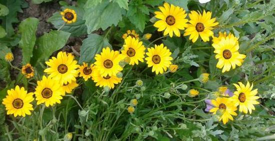 Цветы у Ликки APdIoN1vRxA
