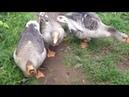 Такие смешные и забавные животные. Подборка приколов. Смешные видео про животных.