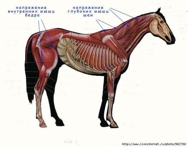 Отказавшить от конного спорта сейчас, ты спасешь тысячи лошадей!