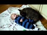 Смешное видео про Собак! Малыш и бульдог, друзья! дети и животные,