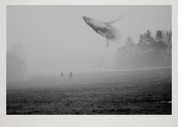 осень была дождливой, полна тумана. кит приходил ночами из океана.