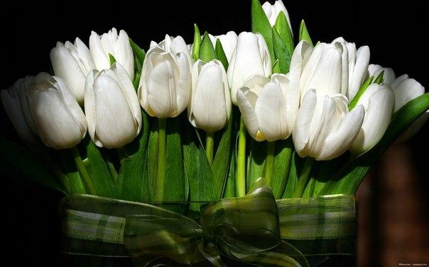 Эти тюльпаны для всех, кому сейчас грустно...