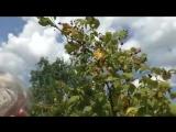 Чему куст малины может научить людей