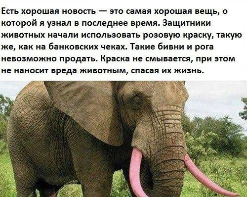 https://pp.vk.me/c635103/v635103045/8f58/FBahnbn4DIw.jpg