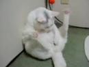 Мастурбирующий кот