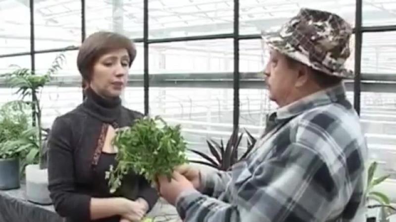 Выращивание зелени поздней осенью
