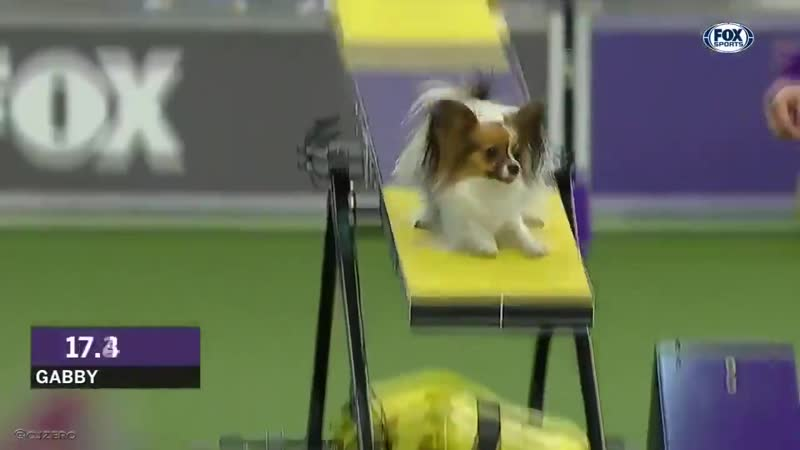 Собачий Усейн Болт Когда прям разрывает от собственного выступления