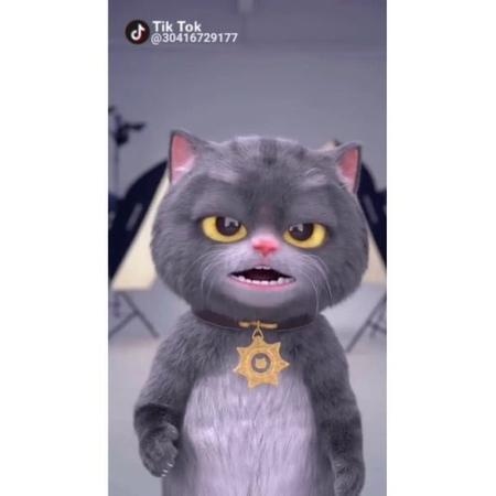 "TikTok_Korea on Instagram ""멋쟁이 냥이 셀카♡Let me take a selfie 틱톡 셀카 셀카놀이 냥이 멋짐 이쁘니 개"