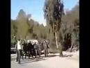 فديوا يظهر عدد كبير من قوات سهيل الحسن على مدخل مدينة اللاذقية استعداد للدخول لمناطق الجبهات في ريف اللاذقية . - - اللهم لا تبقي