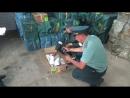 Контрафактные кроссовки поймали челябинские таможенники