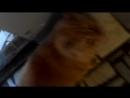 Веду преследование кота Веду преследование кота