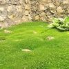 Семена почтой  от Садовый Эльф