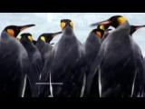 DJ Nil _ X-Mode - В Мире Животных _ Animal Kingdom.mp4