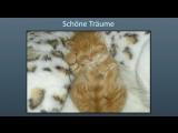 Luzides Träumen 💭 Mit Video Beitrag von Kanal Klartraum - Gedanken der Zeit