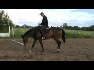 Лепорто шаг. Продается спортивная лошадь.