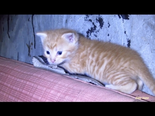 Little kittens - Kittens exploring territory the basement