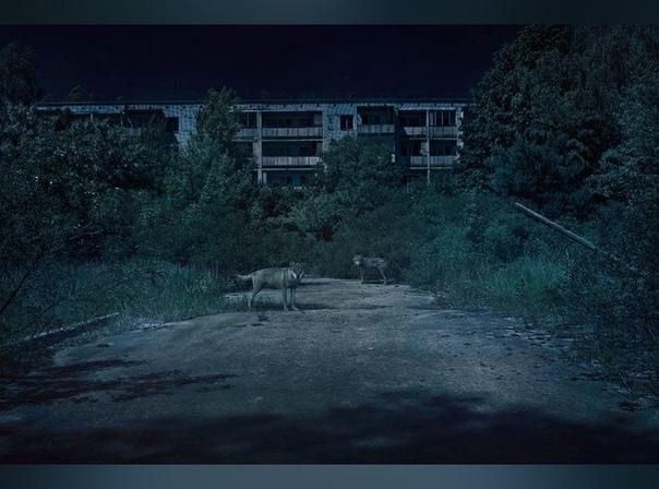 В зоне отчуждения Польский фотограф Адам Ожеховский (Adam Orzechowski) отправился в Чернобыль, чтобы запечатлеть, как на месте ядерной аварии зарождается