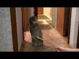 Реакция кота на дверной звонок